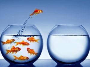 El ajerez ayuda a adaptarse a los cambios